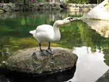 Härliga fåglar i världen av naturen royaltyfri fotografi