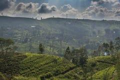 Härliga fantastiska kolonier för landskapsiktste som lokaliseras på kullarna arkivbilder