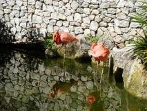 härliga flamingos Arkivfoto