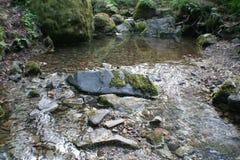 Härliga Forest Creek High Quality royaltyfri foto