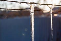 H?rliga, genomskinliga och rena istappar p? solnedg?ngen av vintersolen Hala, kalla och sl?ta modeller av naturen arkivfoto