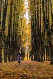 Härliga grändlindar i en höst parkerar Sharovsky slott, Ukraina Royaltyfria Foton
