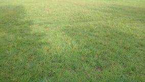 Härliga gräsplanbrutton arkivbilder