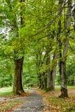 Härliga gröna Forest In Spring Season Bygdväg, bana, väg, gränd, bana på Sunny Day Royaltyfri Bild
