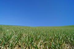 Härliga gröna gras och blå himmel royaltyfri fotografi