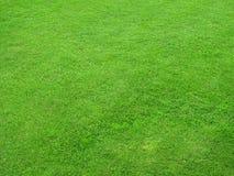 härliga gröna lawns Arkivfoto