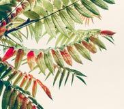 Härliga gröna röda sidor Tropiska sidor på ljus bakgrund royaltyfria bilder