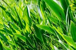 Härliga gröna sidor av blommor En modell av sidor royaltyfri fotografi
