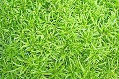 Härliga gröna sidor för bästa sikt, naturlig modellbakgrund royaltyfria foton