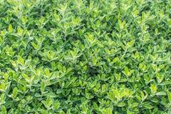 härliga greenleaves arkivfoto