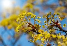 Härliga gula blommor blomstrar på träd closeup fotografering för bildbyråer