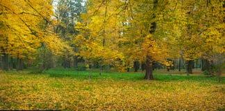 Härliga gula träd i en höst parkerar Att bedöva parkerar landskap i varm höstdag arkivfoton