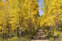 Härliga guld- Aspen Lined Mountain Road Near Vail Colorado Royaltyfri Bild