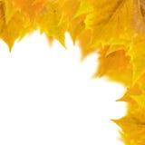 härliga guld- leaves Royaltyfri Bild