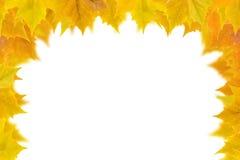 härliga guld- leaves Arkivbilder