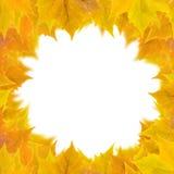 härliga guld- leaves Royaltyfri Foto