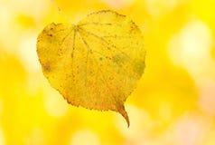 härliga guld- leaves Arkivbild