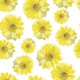 Härliga gulingblommor Fotografering för Bildbyråer