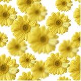 Härliga gulingblommor royaltyfri illustrationer