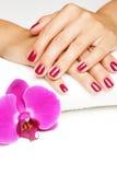 Härliga händer med manicuren Arkivbild