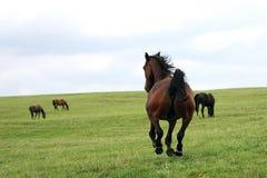 härliga hästar Arkivfoton