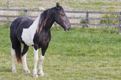 härliga hästar Royaltyfri Fotografi