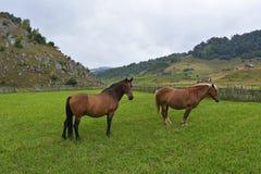 Härliga hästar på en äng Arkivfoto