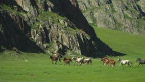 Härliga hästar som körs på dalen Bergområde stock video