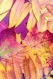 Härliga höstfärger från stupade sidor royaltyfria foton