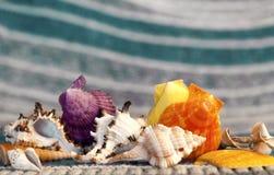 Härliga havsskal på en bakgrund av turkos vinkar arkivbild