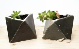 Härliga houseplants i geometriska konstnärliga krukor Royaltyfri Foto