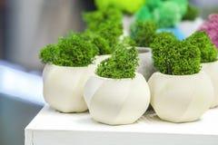 Härliga houseplants i moderiktiga geometriska krukor Betongkrukor med växande mossa i dem Arkivfoton