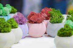 Härliga houseplants i moderiktiga geometriska krukor Betongkrukor med växande mossa i dem Royaltyfri Foto