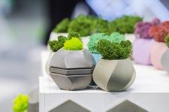 Härliga houseplants i moderiktiga geometriska krukor Små betongkrukor med mossa i dem Royaltyfria Bilder