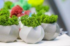Härliga houseplants i moderiktiga geometriska krukor Små betongkrukor som växer mossa i dem Royaltyfria Foton