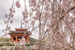 Härliga körsbärsröda blomningar på ingången till den Kiyomizu-dera templet i Kyoto, Japan royaltyfri foto