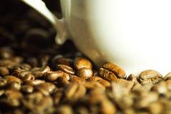 Härliga kaffebönor som en bakgrundsbild royaltyfria foton