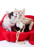 härliga kattungar little Arkivfoton