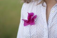 Härliga klämde fast blommor Royaltyfria Bilder