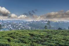 Härliga kolonier för grönt te i Nuwara Eliya arkivfoto
