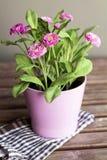 Härliga konstgjorda rosa blommor i rosa färgkruka Fotografering för Bildbyråer