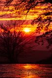 Härliga konturer av träden mot den röda solnedgången Trevlig textur eller bakgrund för tapeter och illustrationer Södra Moravi Royaltyfri Bild