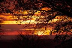 Härliga konturer av träden mot den röda solnedgången Trevlig textur eller bakgrund för tapeter och illustrationer Södra Moravi Arkivfoto