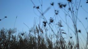 Härliga konturer av växter på skymning fotografering för bildbyråer