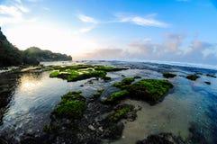 Härliga koraller Arkivfoton