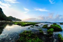 Härliga koraller Fotografering för Bildbyråer