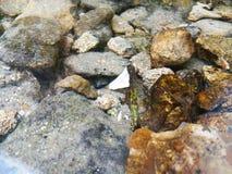 Härliga krusningar på floden flödar över färgrika stenar i sommar arkivbild