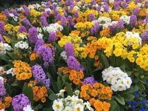 Härliga kulöra blommor arkivbilder