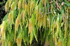Härliga långa sidor av ett tropiskt träd Arkivfoto