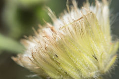 Härliga lösa blommor i skogmakroskott Royaltyfria Bilder